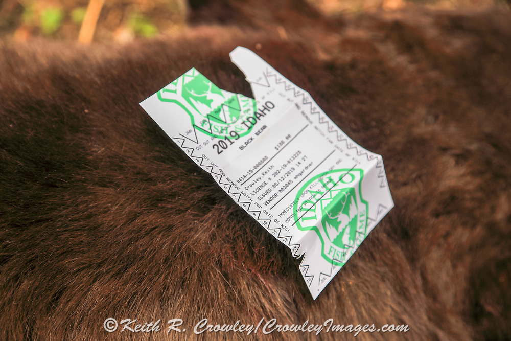 Keith Crowley's notched bear tag from his 2019 black bear hunt with hounds in Idaho.