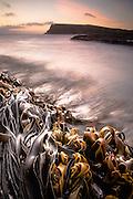 Curio Bay, South Island, New Zealand
