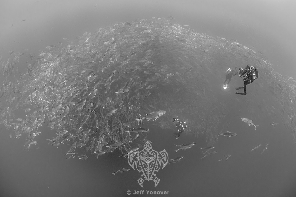 Rebreather divers interact with Schooling Bigeye Jacks<br /> <br /> <br /> Shot at Cocos Island, Costa Rica