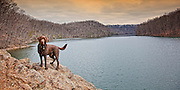Chocolate Lab on Cliffs overlooking Loch Raven Reservoir