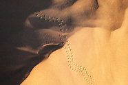 Desert - Animal Tracks
