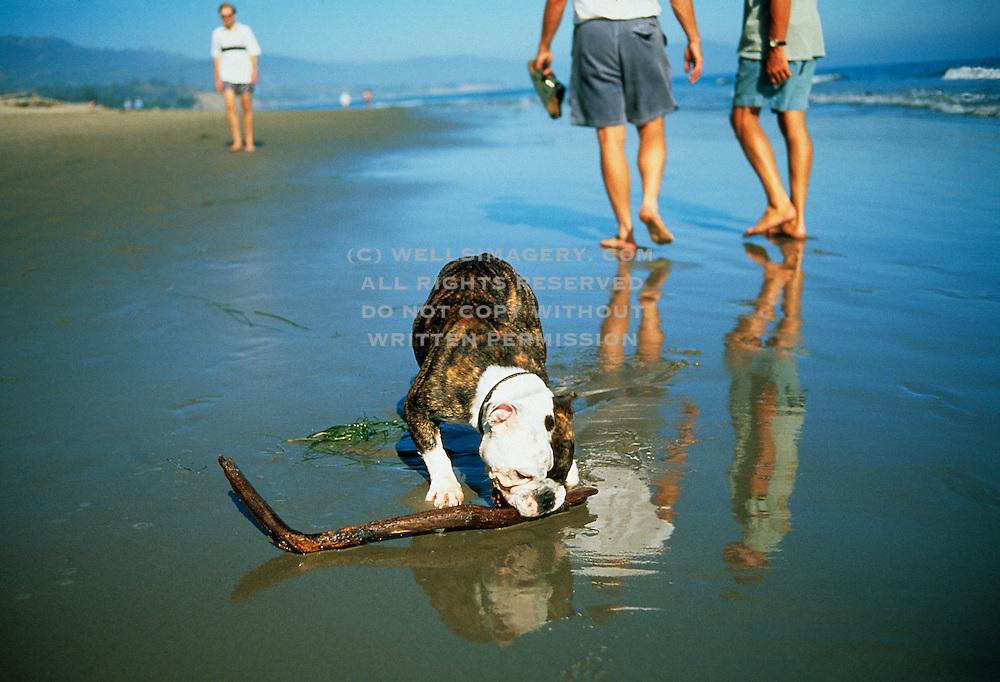 Image of people and dog on Montecito beach, Santa Barbara, California
