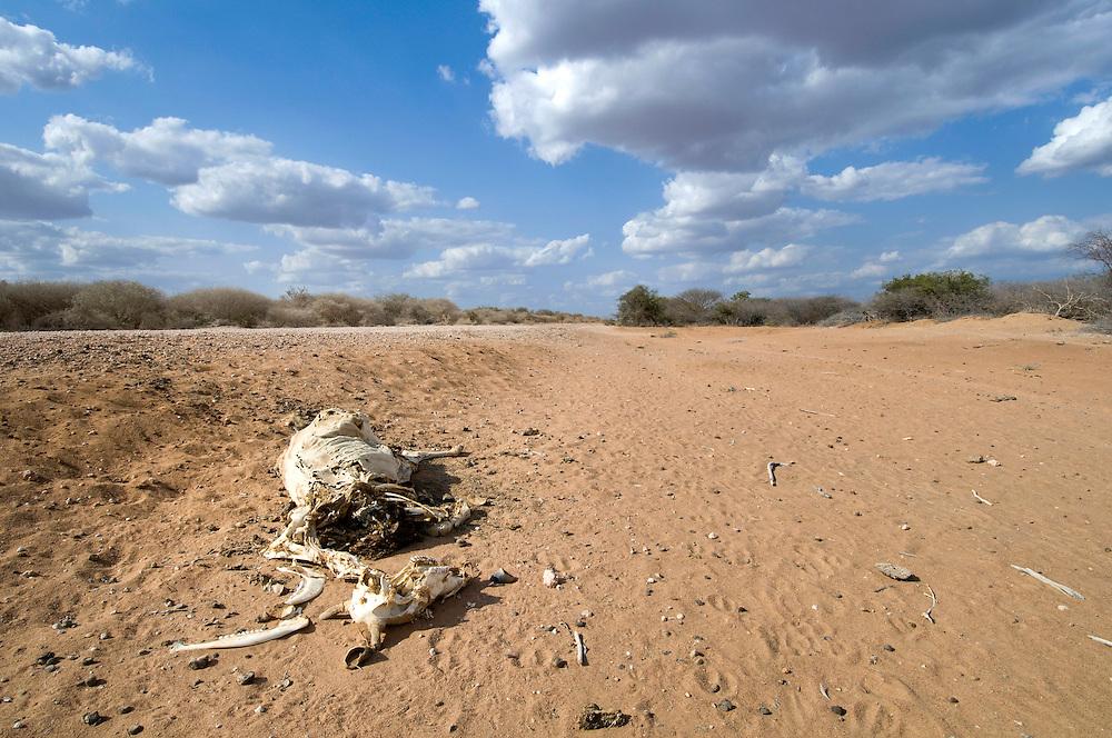 Cattle skeleton on roadside just north of Garissa, Kenya
