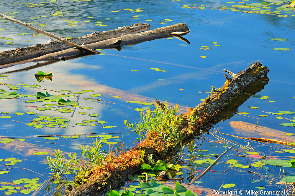 Logs in wetland, Egmont, British Columbia, Canada