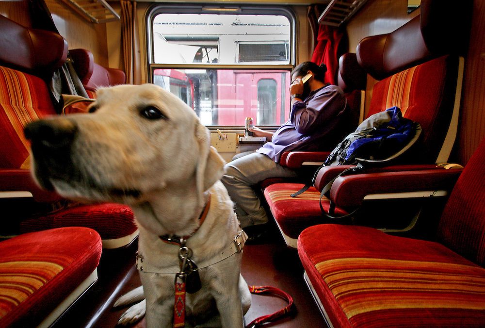 """Guiding dog """"Harley"""" owned by Slovak Roma musician Mario Bihari - who is sitting in the back - in a train."""