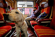 "Guiding dog ""Harley"" owned by Slovak Roma musician Mario Bihari - who is sitting in the back - in a train."