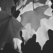 """Sunlight Serenade"" <br />