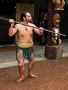A tattooed warrior gestures with a pole at Tamaki Maori Village, Rotorua, North Island, New Zealand For licensing options, please inquire.