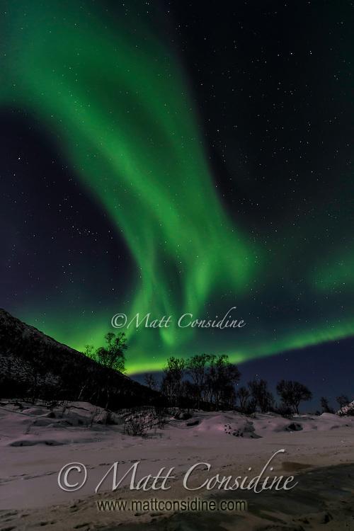 Northern lights over snow and trees. (Photo by Travel Photographer Matt Considine)