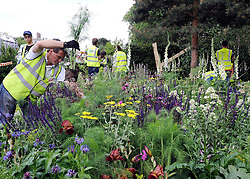 © under license to London News Pictures. LONDON, UK  19/05/2011.Plants are placed in the Kew Garden's exhibit, which is designed to attract Bumble Bees and other wildlife. Exhibitors ready their displays today (19 May 2011) ahead of The Chelsea Flower show in London. Every year the grounds of the Royal Hospital, London, are transformed into show gardens, inspirational small gardens and vibrant horticultural displays that make up the world's most famous flower show which runs from 24 May 2011 to 28 May 2011. Photo credit should read Stephen Simpson/LNP.
