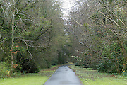 2/4/2002 .Sunday Timews Property.The driveway into Mount Loftus in Kilkenny..Picture Dylan Vaughan