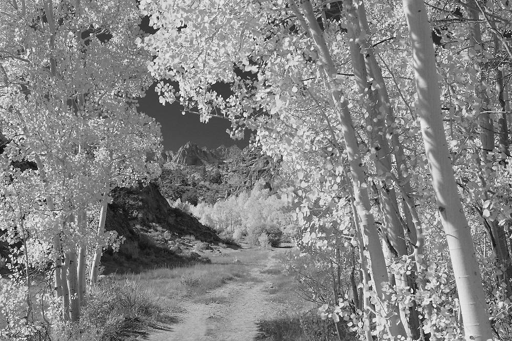 North Lake Road View - Infrared Black & White