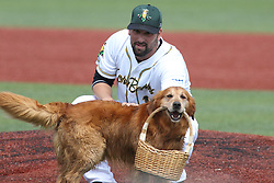 07 June 2015:    Jake the Diamond Dog delivers a basket full of game balls to pitcher Kevin Johnson at the mound during a Frontier League Baseball game between the Southern Illinois Miners and the Normal CornBelters at Corn Crib Stadium on the campus of Heartland Community College in Normal Illinois