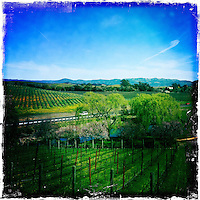 25 February 2012: Domaine Carneros wine tasting in Carneros, California.  iPhone Stock Photo