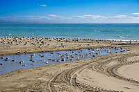 Seabirds, beach, Estepona, Spain, November, 2019, 201912111929<br /><br />Copyright Image from Victor Patterson, Belfast, UK<br /><br />t: +44 28 9066 1296 (from Rep of Ireland 048 9066 1296)<br />m: +44 7802 353836<br /><br />victorpattersonbelfast@gmail.com<br />www.victorpatterson.com<br /><br />Please see my Terms and Conditions of Use at https://www.victorpatterson.com/page2<br />It is IMPORTANT that you familiarise yourself with them.<br /><br />Images used online incur an additional cost and must be visibly watermarked i.e. © Victor Patterson within the body of the image and copyright metadata must not be deleted. Images used on the Internet have a size restriction of 4kbs and are chargeable at rates available at victorpatterson.com.<br /><br />This image is only available for the use of the download recipient i.e. television station, newspaper, magazine, book publisher, etc, and must not be passed on to any third party. It is also downloaded on condition that each and every subsequent usage is notified within 7 days to victorpattersonbelfast@gmail.com<br /><br />The right of Victor Patterson to be identified as the author is asserted in accordance with The Copyright Designs And Patents Act (1988). All moral rights are asserted.