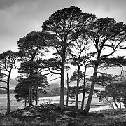 Remnants of ancient Caledonian forest on Doire Darach above Loch Tulla