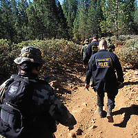 "The national forests in California and across the nation are increasingly being used to grow marijuana. The clandestine grows are shielded by tree canopies and are often close to, if not actually inside, recreational usage areas so that the growers can appear to be normal recreational users. A task force comprised of Sheriff deputies, US Forest Service Agents and Dept. of Justice agents raided a grow in the Tahoe National Forest that yielded 5000 plants in the 2""-12"" range and arrested one Mexican national who was tending the grow. Here, the task force hikes back into the grow area to begin the eradication of the grow."