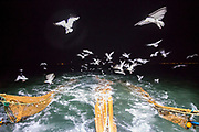 Seagulls hover behind the boat as the nets are returned to the sea.  Luke is a Folkestone based fisherman out trawling for a 12 hour night shift on a fishing trip in his boat Valentine (FE20), Hythe Bay, the English Channel, United Kingdom. <br /> (photo by Andrew Aitchison / In pictures via Getty Images)