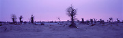 Barren Trees, Taklamakan Desert, China, 1996