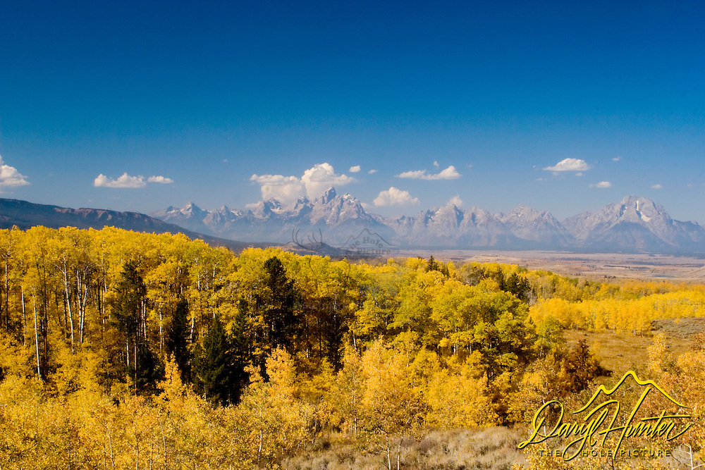 """Golden Aspens and the Grand Tetons from the Bridger Teton National Forest.<br /> <br /> For production prints or stock photos click the Purchase Print/License Photo Button in upper Right; for Fine Art """"Custom Prints"""" contact Daryl - 208-709-3250 or dh@greater-yellowstone.com"""