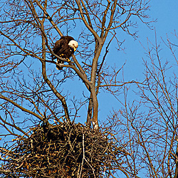 A mother's look is seemingly all that's needed to maintain order in this nest ...