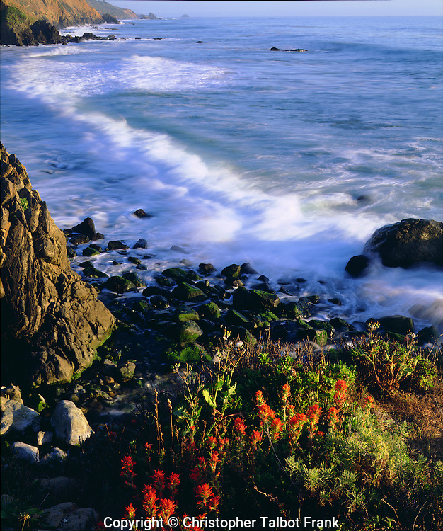 I took a photo of this amazing display of wildflowers along the California Coast in Big Sur.  The brilliant red flowers, crashing wave, and Pacific Ocean coastline make for a nice scenic image.