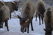 Animals of Idaho