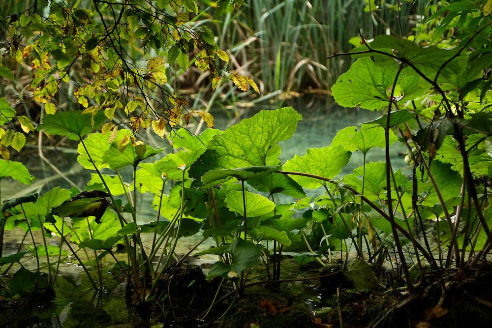 Lush vegetation at Plitvice Lakes, Croatia.