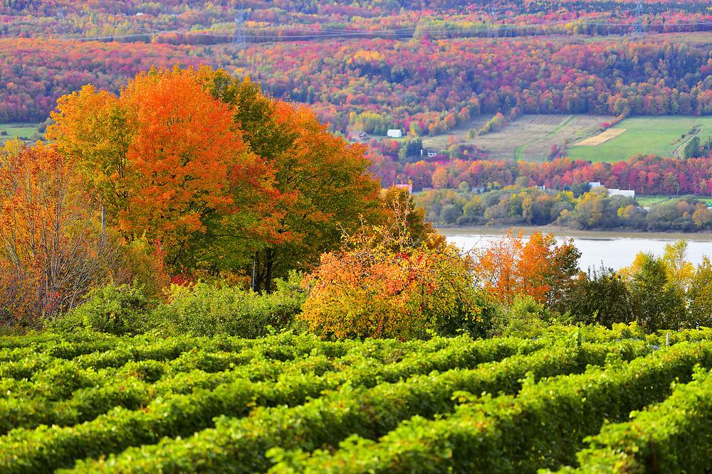 Seen on the autumnal colors of the left bank of St Laurent since the island of Orléans. Vue sur les couleurs automnales de la rive gauche du St Laurent depuis l'ile d'Orléans.