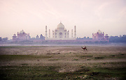 camel outside Taj Mahal