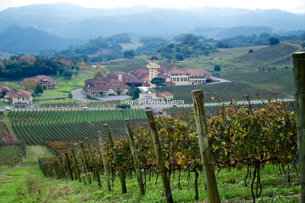 Vignobles et caves dans la vallées des vignobles