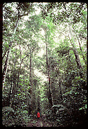 07: AMAZON ECO PLOTS TREES