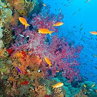 Alberto Carrera, Coral Reef, Red Sea, Egypt