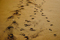 Dingle Footprints