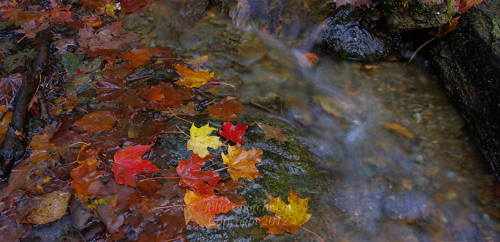 Fall leaves with water stream