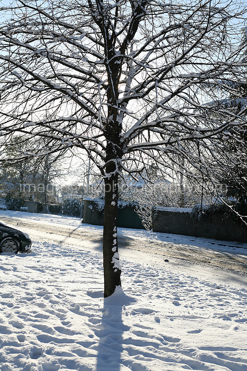 Snow covered tree in Dublin Ireland during the cold snap in November 2010