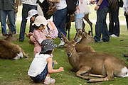 Japanese children feeding the deer in a park in Nara, Japan. This park is well-known for its access to deer by tourists, and its proximity to some key Buddhist and Shinto temples.