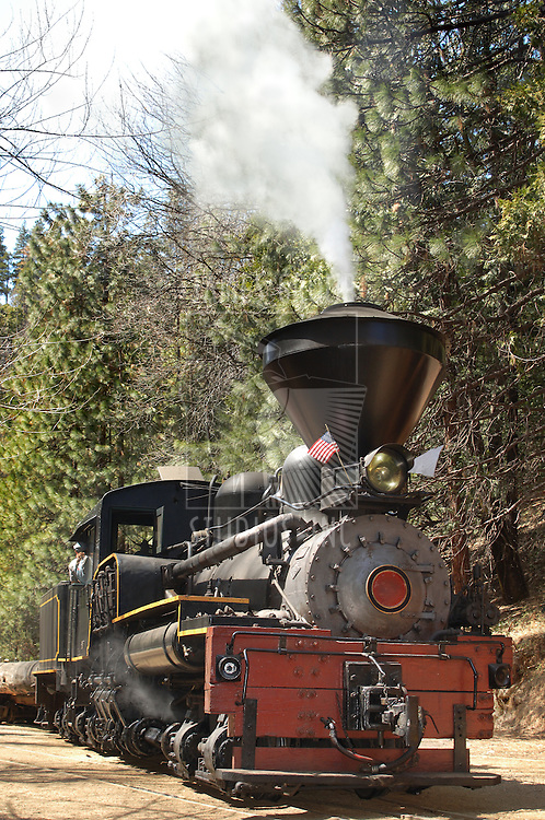 Vertical shot of a vintage steam logomotive in a pine forest