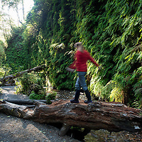 A woman climbs on a fallen log in Fern Canyon, a canyon in the Prairie Creek Redwoods State Park in Humboldt County, California, USA. It was one of the shooting locations of the movie Jurassic Park 2: The Lost World.