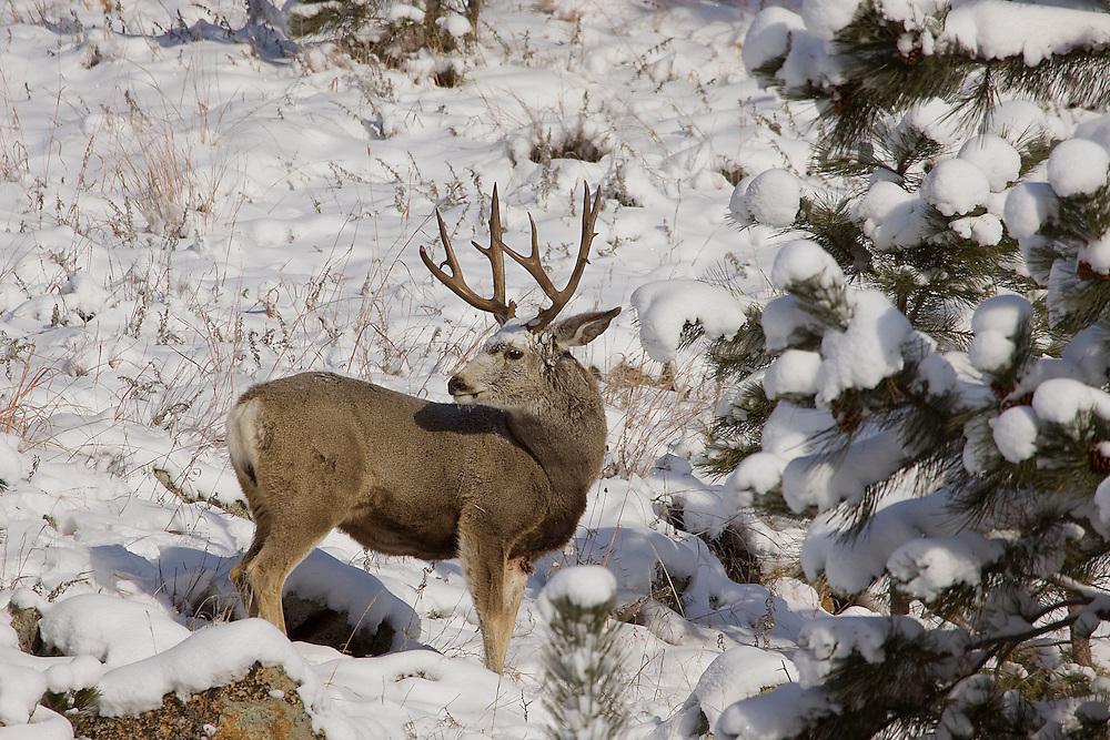 Oklahoma Wildlife Photographer