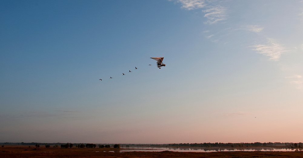 An ultralight aircraft operated by Operation Migration trains a group of Whooping Cranes to migrate south from Necedah National Wildlife Refuge in Necedah Wisconsin in September 2007. Photo by Tom Lynn