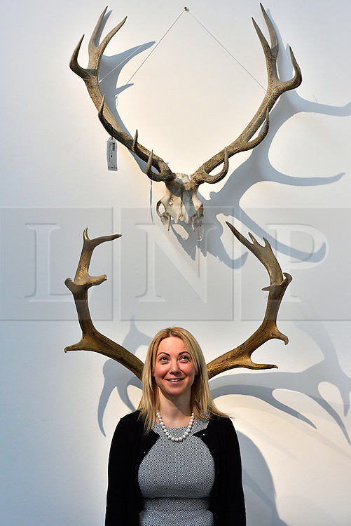 © Licensed to London News Pictures. 26/03/2016.  Two sets of red deer antlers, 20th century, with an estimate of £500-700. The Duchess of Devonshire press preview at Sotheby's auction house.  The Duchess, Deborah Mitford, was the youngest surviving member of the six Mitford sisters, and died in September 2014. London, UK. Photo credit: Ray Tang/LNP
