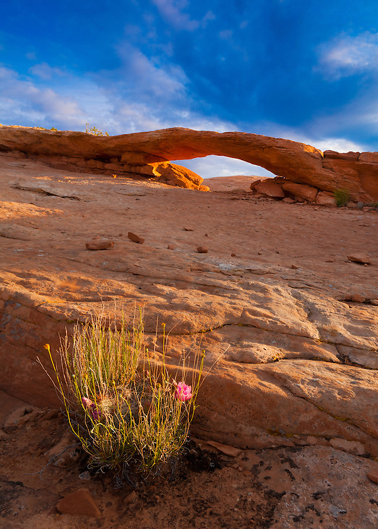 An unnamed arch on Comb Ridge. Southern Utah near the town of Bluff.