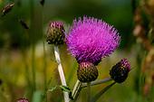BBC CountryFile Yorkshire Flower Meadows