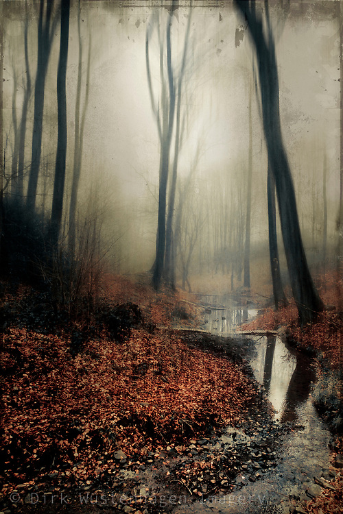 Creek and forest on a misty late winter morning - textured photograph