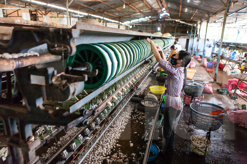 Process of reeling silk filament in a silk production factory, Da Lat, Vietnam, Southeast Asia