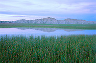 Buffalo Gap National Grasslands, South Dakota. In an almost surreal scene on the South Dakota prairie, distant badlands formations painted in purple twilight are reflected in a shallow wetland pool, surrounded by the lush greens of an exceptionally wet summer. The Badlands and their unique, mystical beauty are like no other place on the continent. Once considered a wasteland, much of the region now is recognized for its natural values.