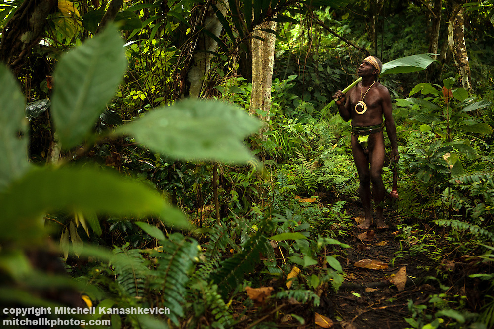 Chief Ayar is a traditional Ni Vanuatu man. Every day he walks through the bush with his dogs and checks that wild pigs have not destroyed his cros. Near the village of Wintua, South West Bay, Malekula, Vanuatu
