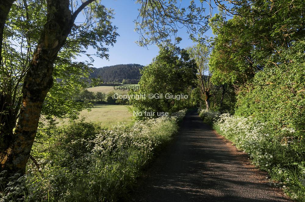France, Occitanie, Lozère (48), campagne autour du village les Salelles // France, Occitanie, Lozere departement, country side area of Les Salelles village