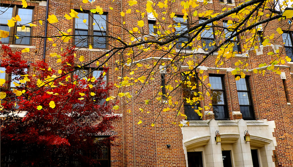 Warriner Mall fall scenics near the seal. Photos by Steve Jessmore/Central Michigan University